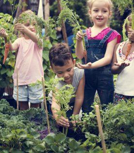 School farming children and Agro Block